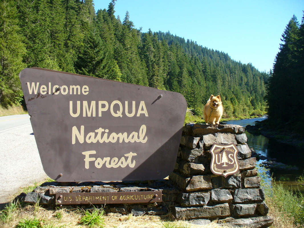Umpqua National Forest Fire